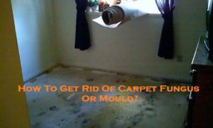How To Get Rid Of Carpet Fungus Or Mould?